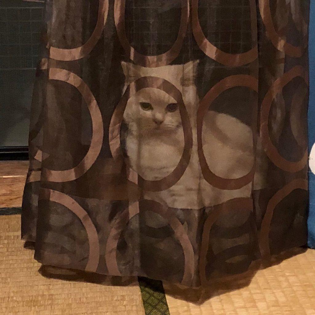 隠れてるつもりみたいだけどそのカーテン透けてるよw