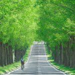 四季のメタセコイア並木