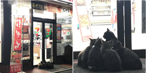 猫がセブンの前で暖をとってる…