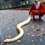 福岡市動物園でクリスマスイベント ヘビサンタ登場