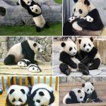 双子のパンダが和歌山にいることすら知られてないんちゃうか?