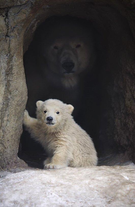 お前が子熊を覗いている時、親熊もまたお前を覗いているのだ。
