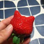 猫ちゃんみたいなイチゴがあった