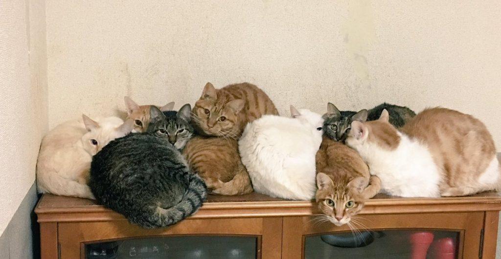 ネコはコタツで丸くなりたい