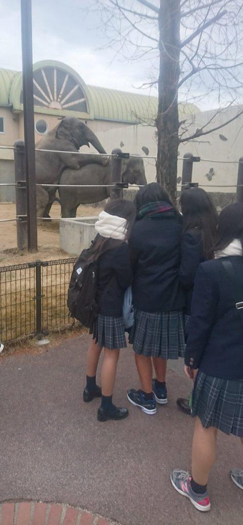 象さんカップルの発情