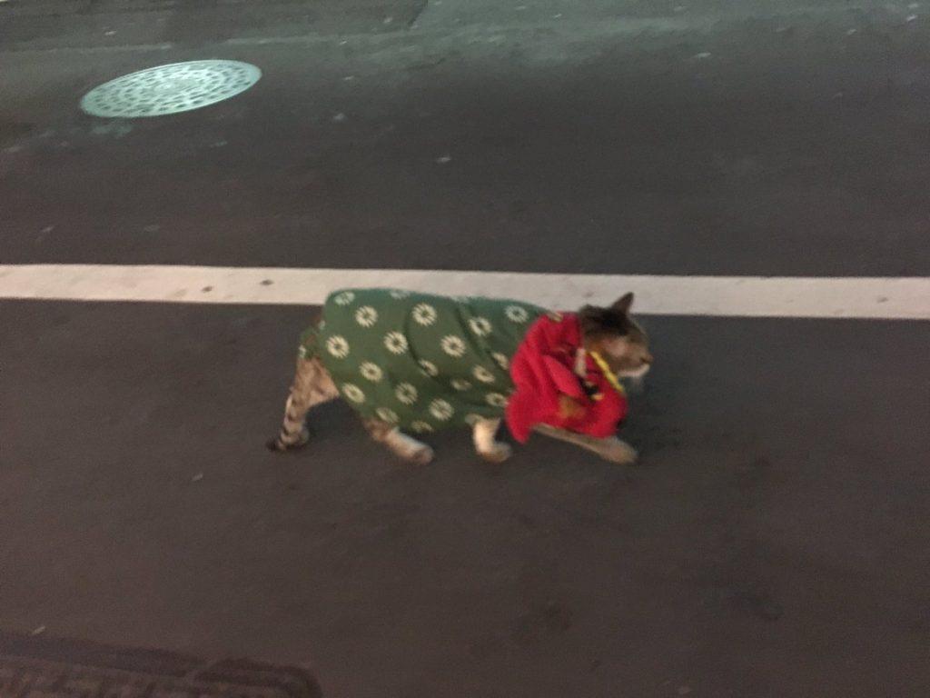 獅子舞の格好してるネコ
