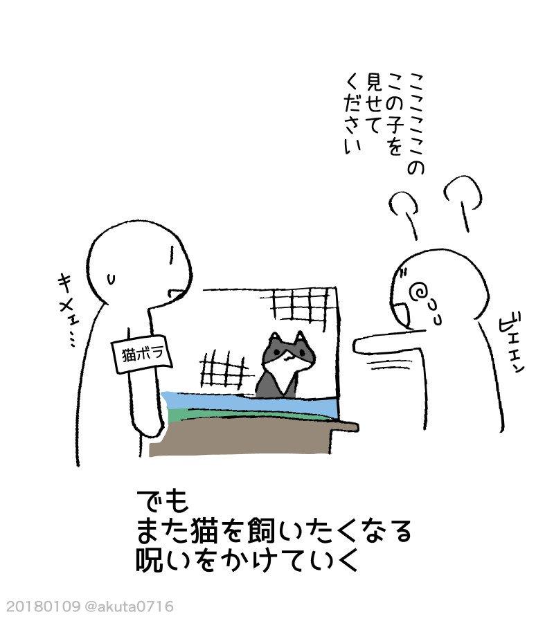 猫の飼い主あるある