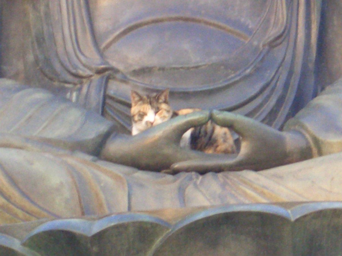 東京都文京区護国寺の大仏猫