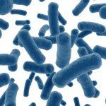 乳酸菌が腸に良い理由