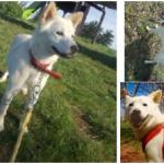 【迷い犬】札幌市北区のガトーキングダム周辺