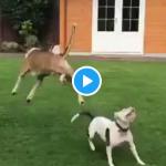これ以上楽しそうな犬を僕は知らない