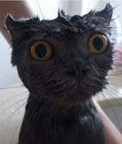 洗うんかい