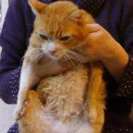 病院で猫アレルギーの疑いを指摘される