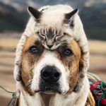 【アンケート】あなたは犬派?それとも猫派?