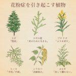 花粉症を引き起こす植物の花言葉
