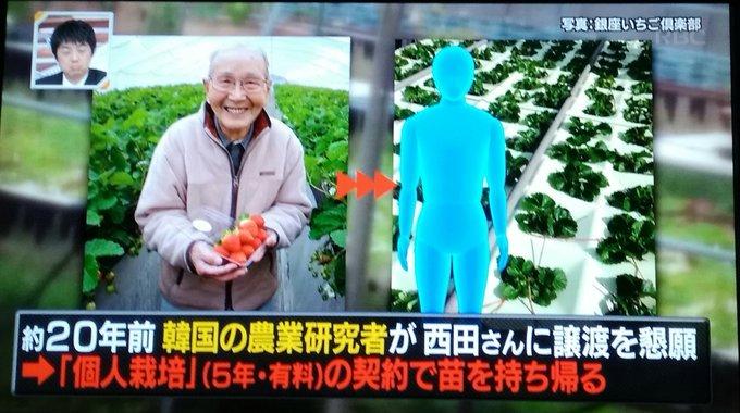 【カーリング女子】「韓国のイチゴが美味しい」の裏側で