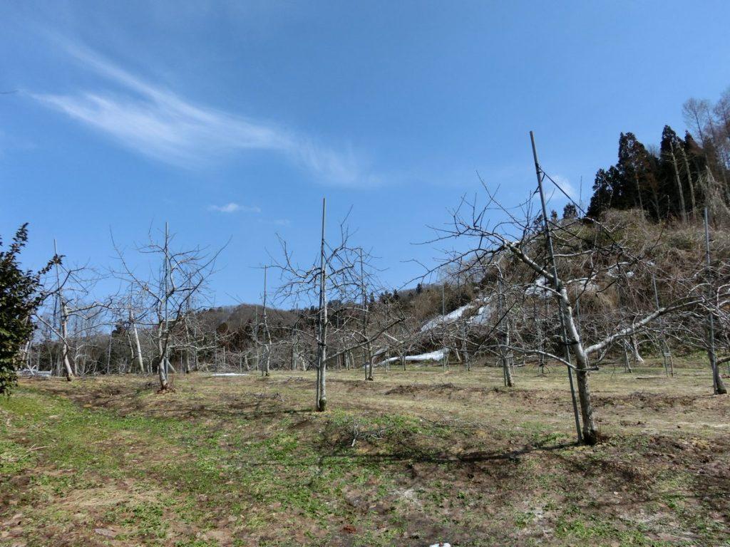 リンゴ農家募集