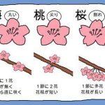 梅・桃・桜の違い