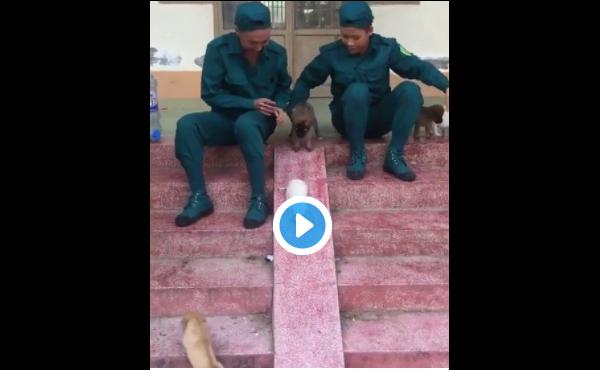 【癒し動画】滑り台で楽しむ仔犬たち