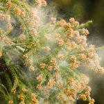花粉症患者増加の理由