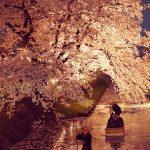 【夜桜】川越の氷川神社の裏手にある新河岸川