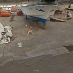 Googleストリートビューの撮影車を追いかける犬【種子島】