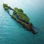 沈没した艦艇から植物が生えた島