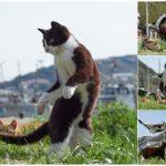 【のら猫拳】ニャンコたちの戦闘訓練
