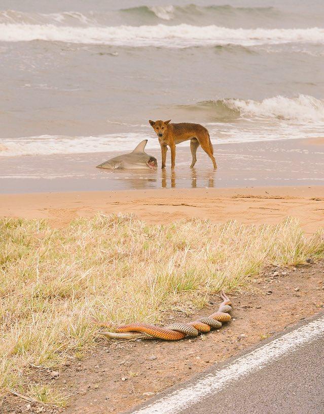 この写真を観てオーストラリアから母と電話した話