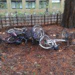 北大は自然豊かだから春になると自転車の死骸が出てくる