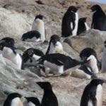 ペンギンは浮気したオスを群れで袋叩きにするんですけど