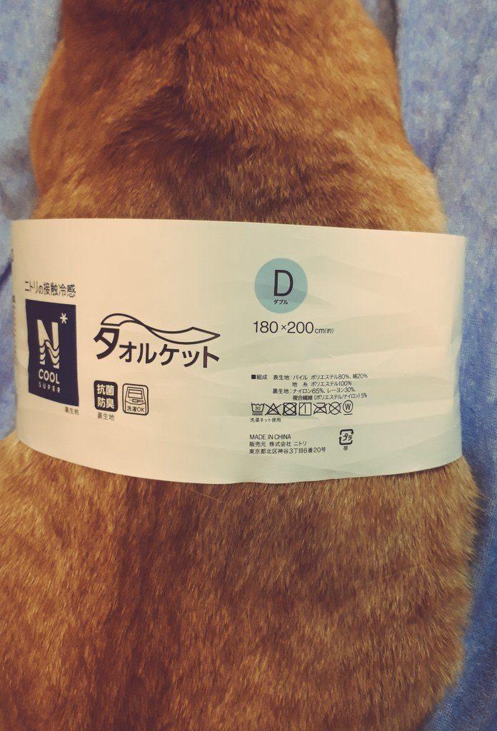 ニトリのタオルケット買った!