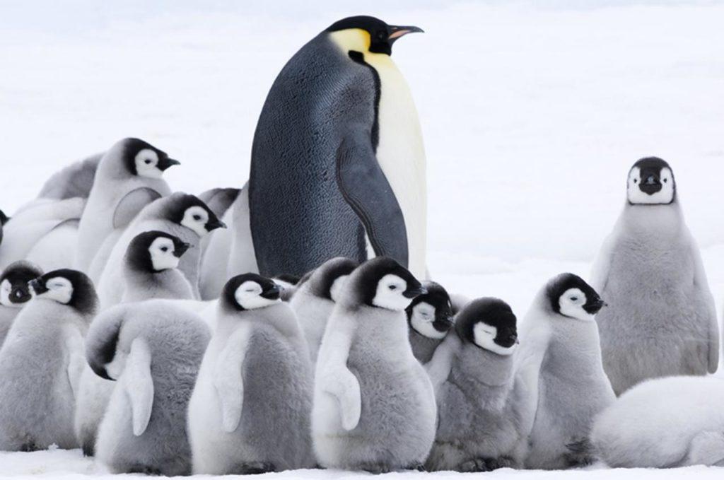 ペンギン保育園の遠足【動画】