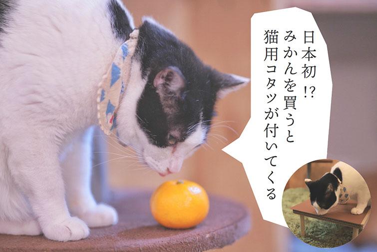 みかん5キロを買うと、猫用のコタツが付いてくる。