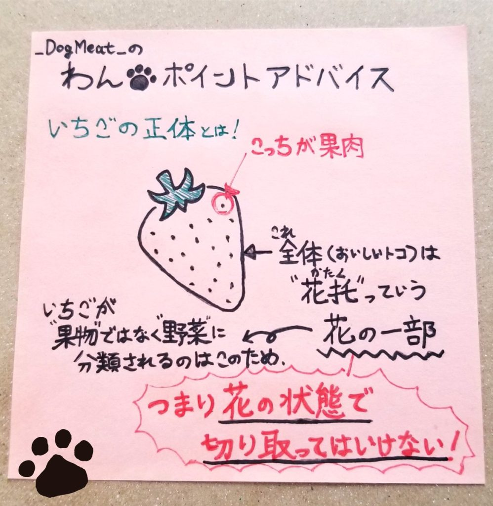 いちごが「果物」ではなく「野菜」に分類される理由