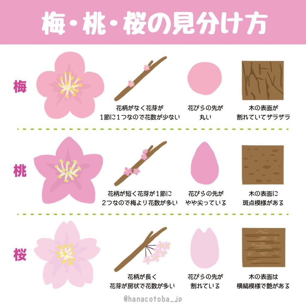 梅・桃・桜の違いと見分け方