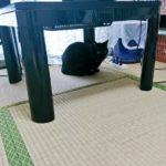 元こたつで呆然とする猫