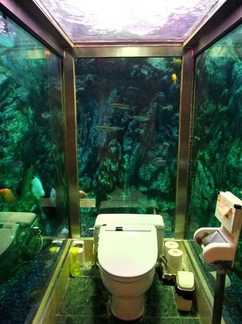 【動画】兵庫県明石市「ヒポポパパ」の水槽の中にあるトイレ