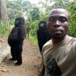 コンゴでのゴリラ密猟者に睨みを効かせる国立公園管理者とゴリラ。