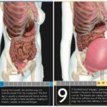 妊娠1ヶ月(最後の生理なので妊娠前)と臨月の女性の身体の違い。