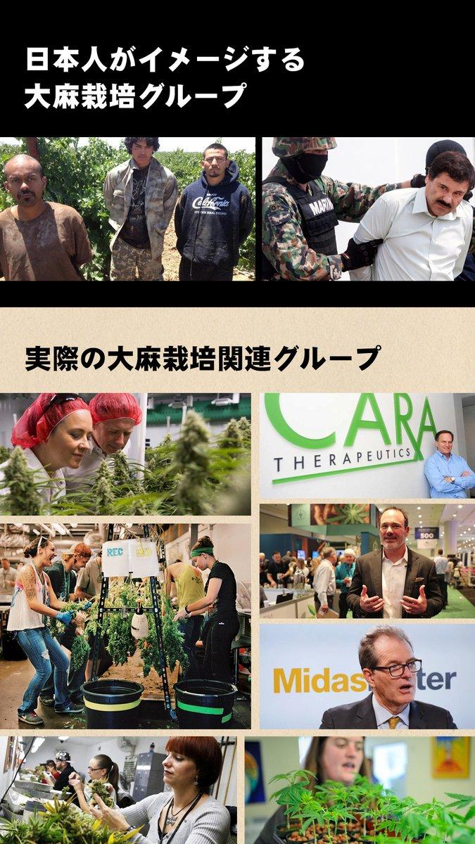 【大麻について】イメージと現実とのギャップすごい