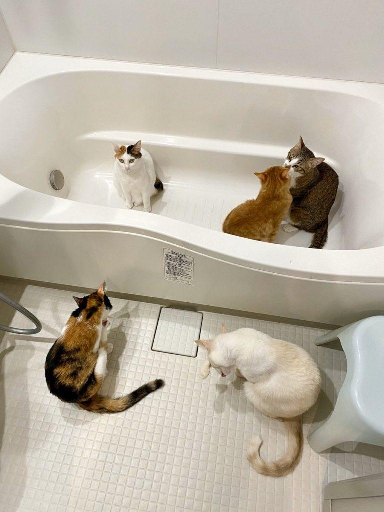 浴室暖房つけた瞬間、コレ。