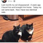 現在同じ猫を2匹飼ってる。