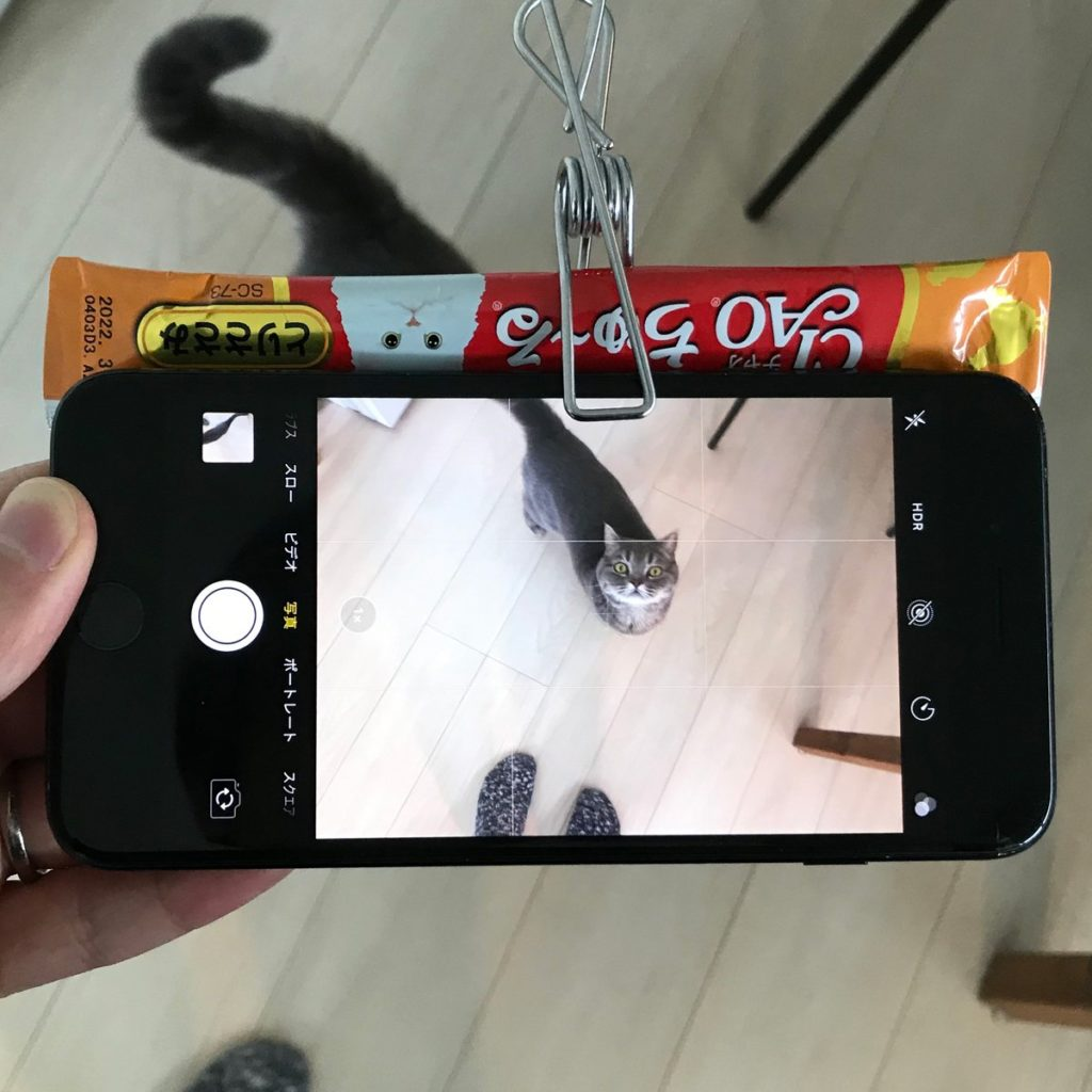 ネコが絶対に目線をくれるシステムを開発しました