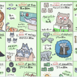「群れ」を表すときの表現=集合名詞、は動物ごとにかなり多様