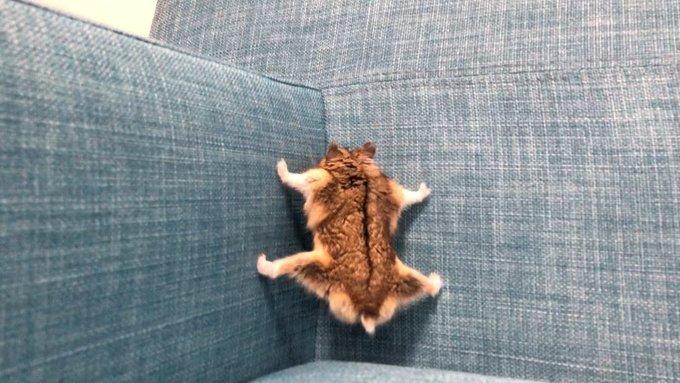 家のソファーにSASUKEが実装