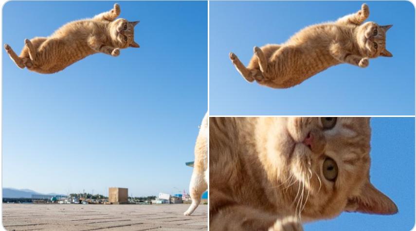 飛んでる最中に世界の真理と世の無常を理解し虚無になる猫