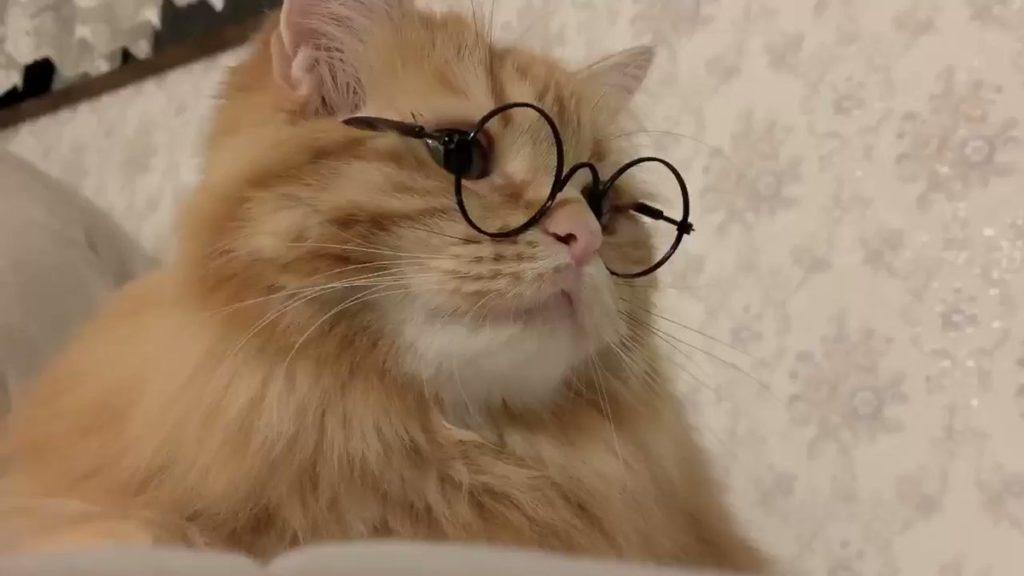 【動画】メガネが似合いすぎるニャンコ