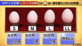 卵の大きさの知られざる事実