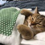 子猫用の布団作ったら寝てる姿が可愛すぎた